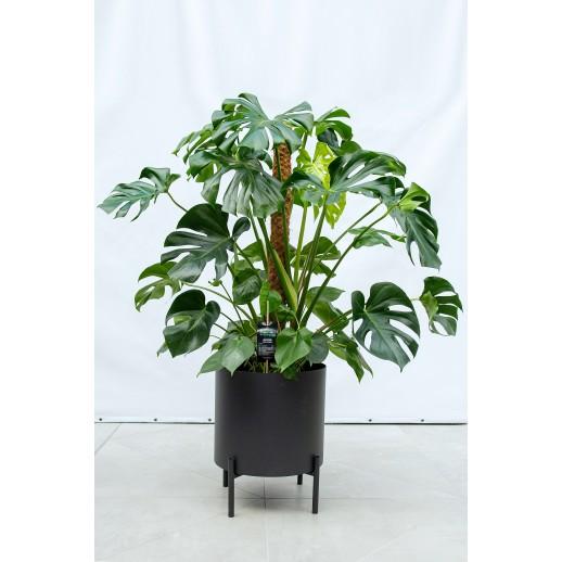 Jungle Flora metalinis vazonas Paupys 400